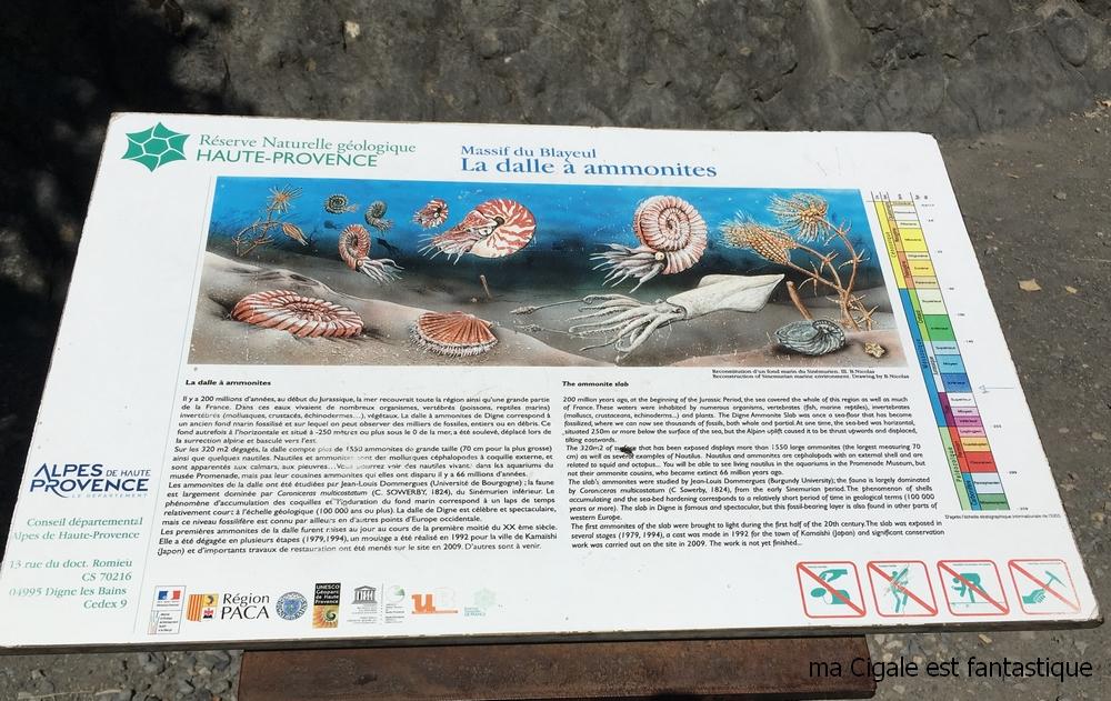 Dalles aux ammonites - Digne les bains - Unesco Géoparc